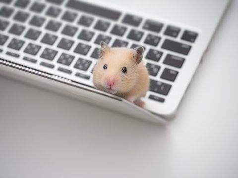 Hamster using a laptop
