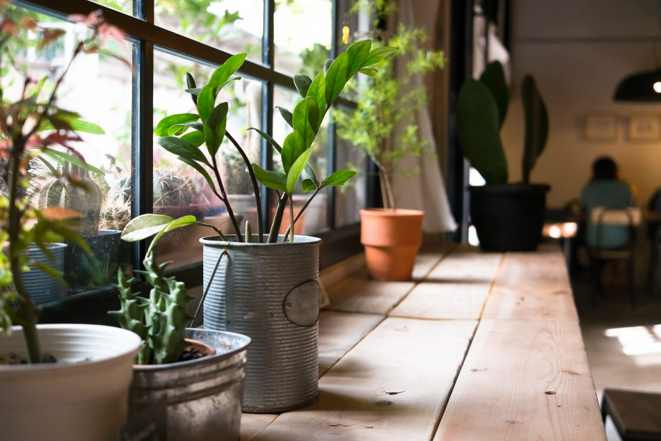 Asian plant