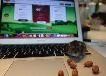 Hostens Hamster