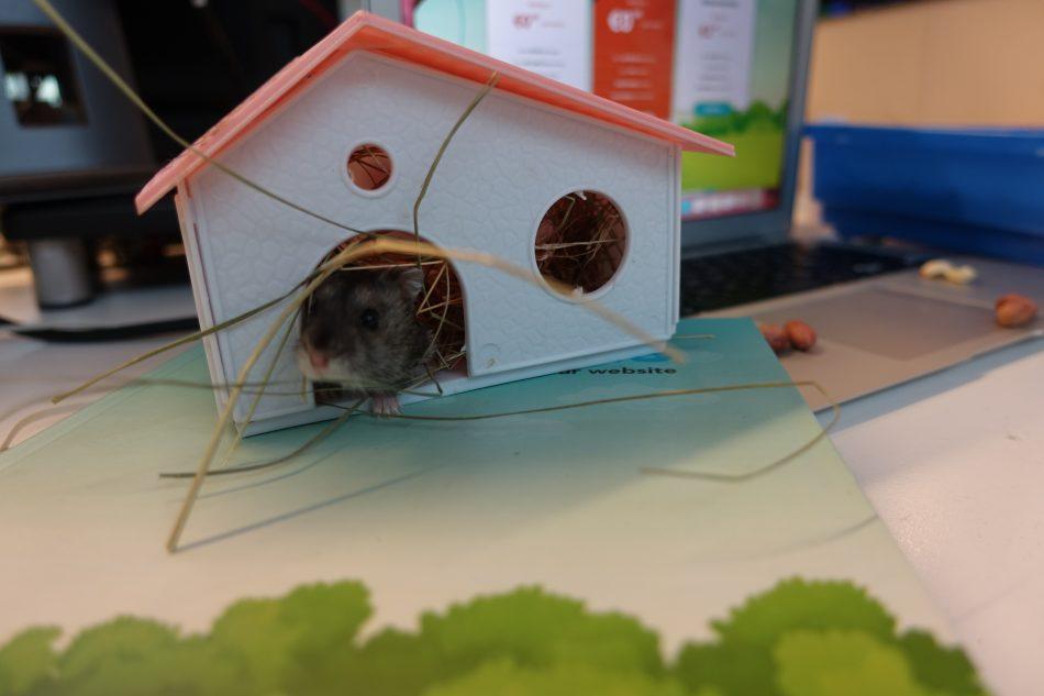 Hostens Hamster Home