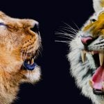 Animal Apache VS Nginx