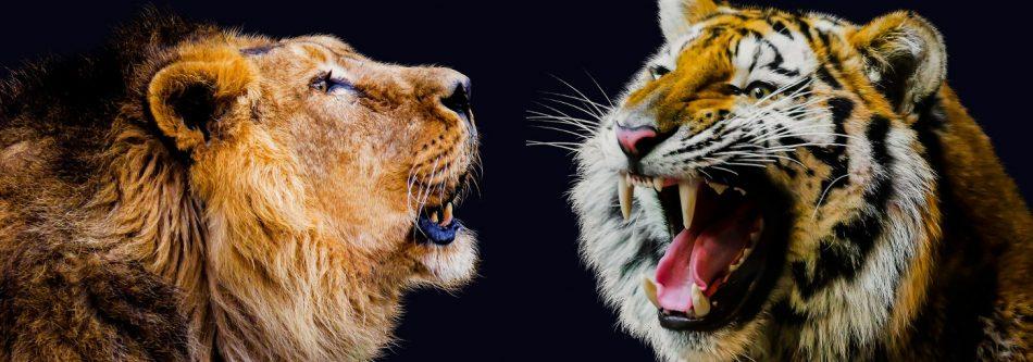Animal Apache VS Nginx